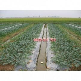 Màng phủ nông nghiệp 4