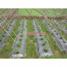 Màng phủ nông nghiệp 2