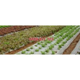 Màng phủ nông nghiệp 1